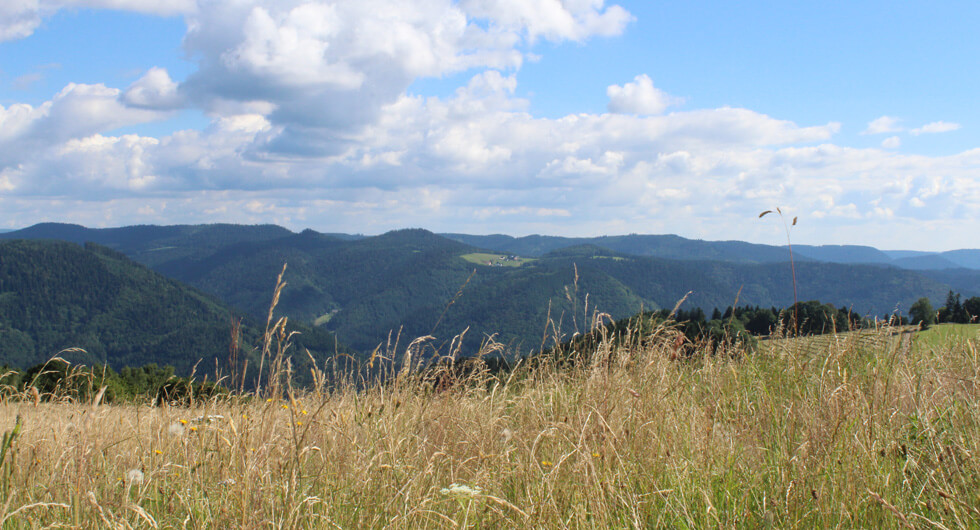 Blick ins Kinzigtal von der Grub, Wolfach