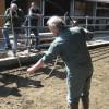 Workshop Sicherheit im Umgang mit Rindern Schramberg 2012. Foto: LEV MS