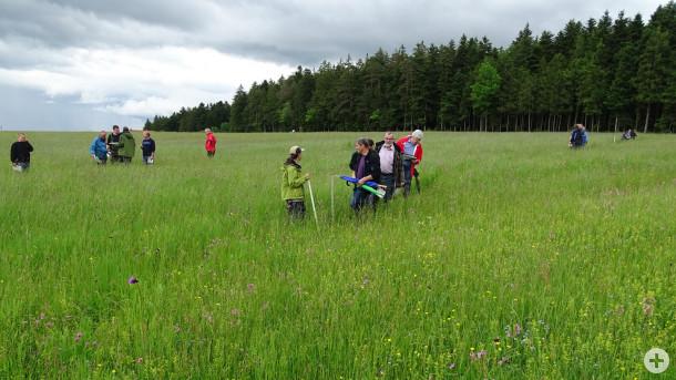 FAKT Blümchenschulung 2016 - Kartierübung nach Kartieranleitung. Foto: LEV RW