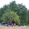 Schulprojekt Streuobstwiese Herbstaktion - Es werden Äpfel für den Apfelsaft gesammelt!