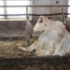 Stallbaulehrfahrt - Seminar Stallbaulösungen für kleine Rinderbestände - Milchviehbetrieb 1. Foto: LEV MS