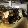 Stallbaulehrfahrt - Seminar Stallbaulösungen für kleine Rinderbestände - Mutterkuhbetrieb 2. Foto: LEV MS