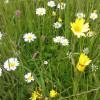 Blumenwiese. Foto: LEV MS