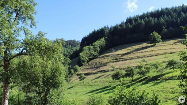 Steile Hanglagen sind aufwändig zu bewirtschaften. Foto: LEV MS