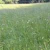 Blumenbunt und dazu sehr steil. Foto: LEV MS.