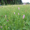 Vom Schwarzwald...Foto: LEV MS.