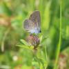 Blumenbunte Wiesen sind ein Paradies für Schmetterlinge...Foto: LEV MS.