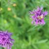 ...und Bienen. Foto: LEV MS.