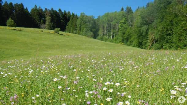 Im Jahr 2019 wurden ca. 8 ha Spenderflächen im Schwarzwald beerntet. Foto: Ifab Mannheim